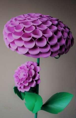 Помпонный розовый георгин (ростовые цветы)