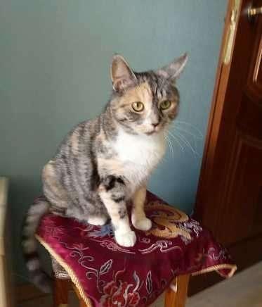 Кошечка красавица ищет дом, стерилизована