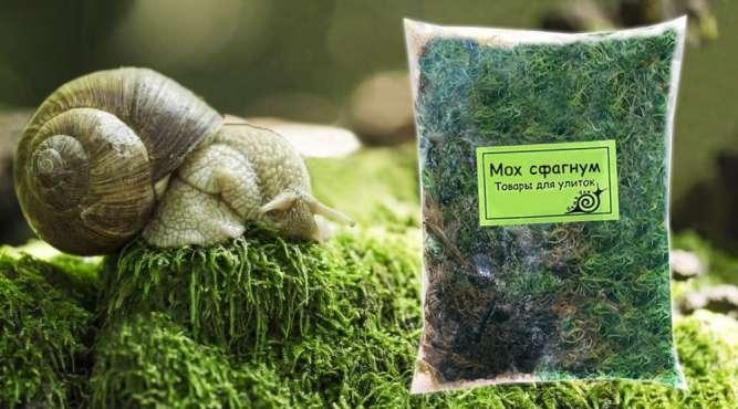 Для улиток и др. свежий мох дешево 15 грн
