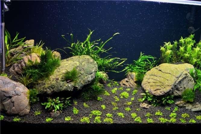 Большой выбор аквариумных грунтов и камней