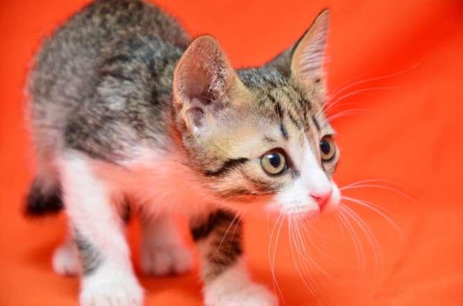 Котик Муркотик, 1,5 месяца, ждёт вас