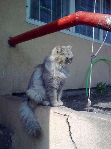 Пропала кошка Бежка на Оболони. Помогите найти!