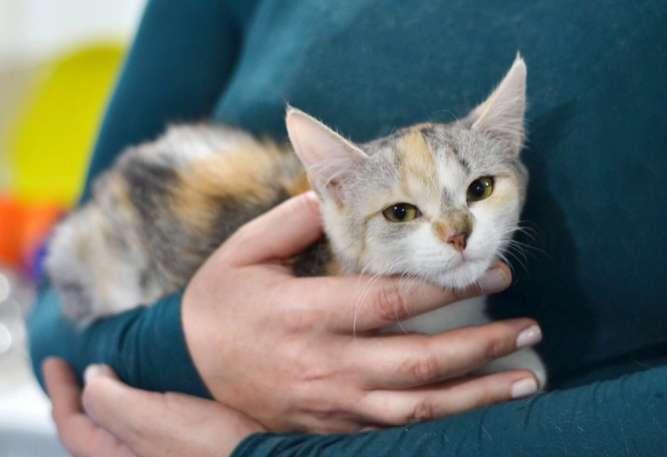 Котёнок Ляля, 3 месяца