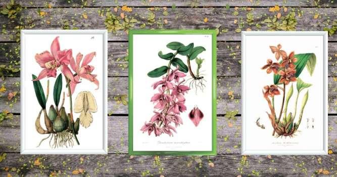 Постеры, плакаты, винтажная ботаника в рамке, смешные цитаты, декор