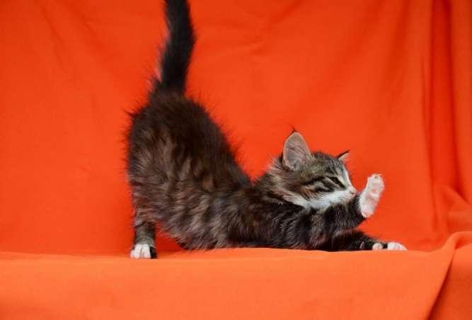 Красавчик Котя ищет дом (котенок, 2 месяца, кот)