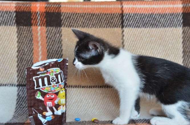 Котеня - пухнастий друг