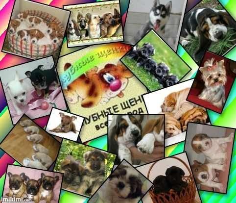 Клубные щенки разных пород