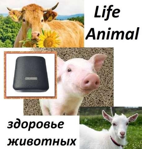 Лечение домашних животных Life Animal. 4 уровня мощности.