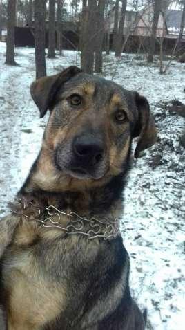 Акбай, крупный пес ищет дом