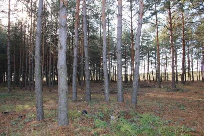 Участок в хвойном лесу возле Днепра, с. Процев