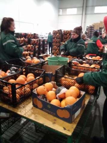 Работа для женщин, мужчин и пар на складах фруктов и продукто в Литве