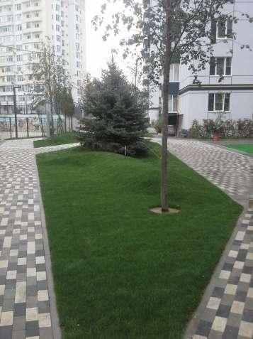 Озеленення