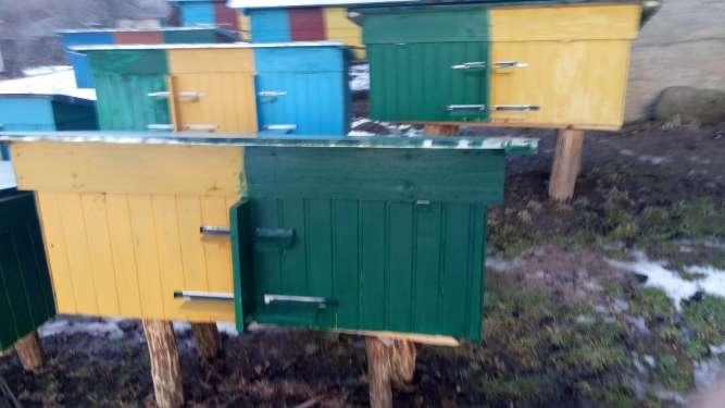 продаж бджолопакeтів