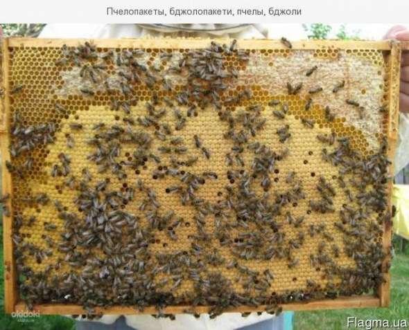 Продаю бджолопакети весною