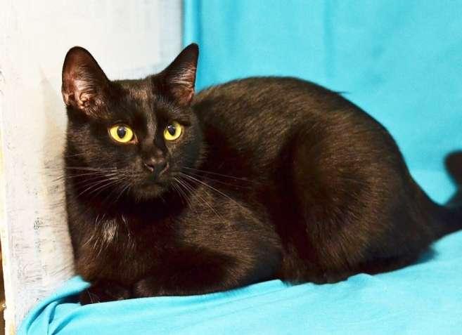 Котик Томас, 8 месяцев