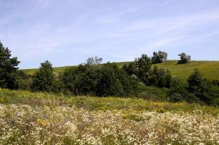 Земельна ділянка поруч із Львовом