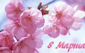 Карпаты на 8 марта из Киева, тур в Буковель 8 марта, Закарпатье туры