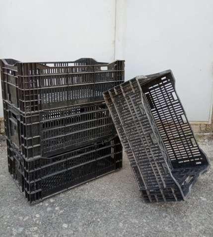 Пластмассовые ящики для выгонки луковичных растений