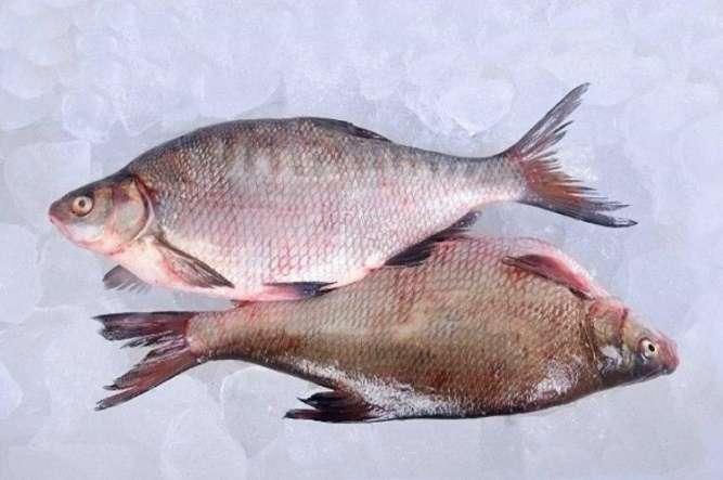 Риба свіжа річкова гуртовий продаж - зображення 5