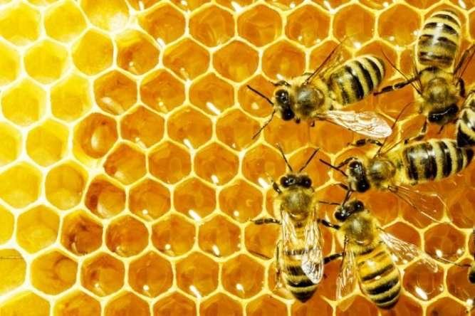 Продам натуральный мед с собственной пасеки