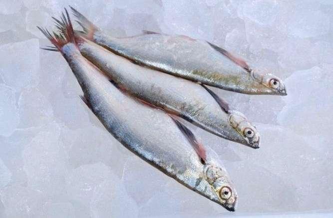 Риба свіжа річкова гуртовий продаж - зображення 3