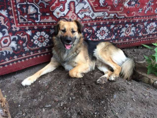 Собака в будку/ вольер