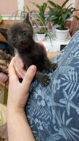 Хорошие котики в хорошие руки! Даром