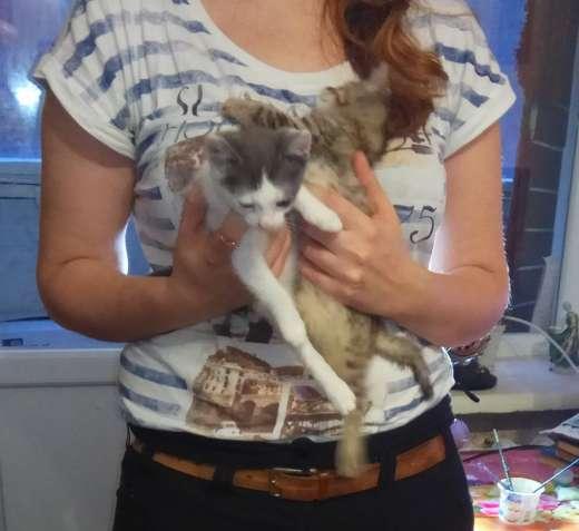 Вiддам гарних кошенят в добрi руки