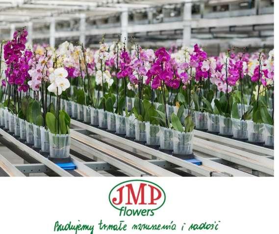 Упаковка цветов на теплицах JMP Flowers/от 3500 zl/Жилье/ Польша