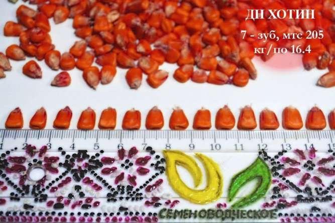 Семена кукурузы Хотин ФАО 280