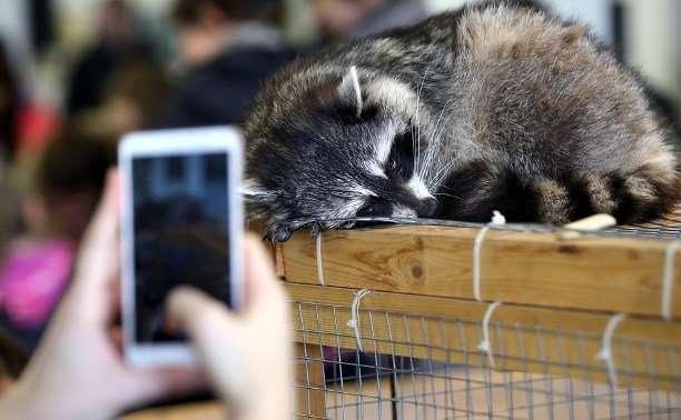 Помощница по уходу за животными