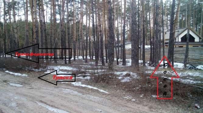 Продажа участков в сосновом лесу для постройки дома