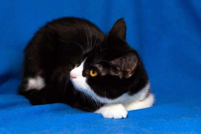 Арни, черно-белый котик, 5 месяцев